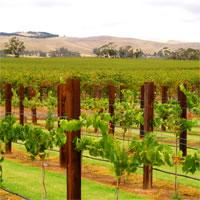 Adelaide-Barossa Valley